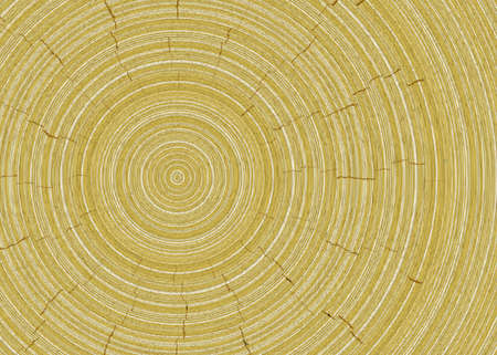 rings on a tree cut: rings of tree cut wood texture backgrounds