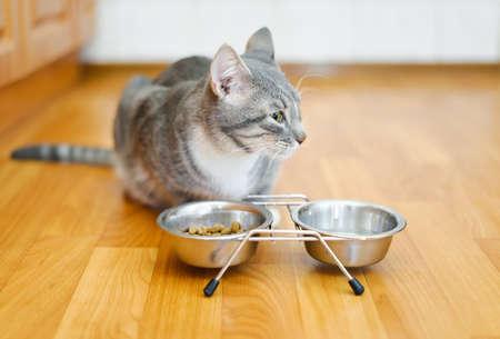 若い猫の皿から食べ物を食べた後