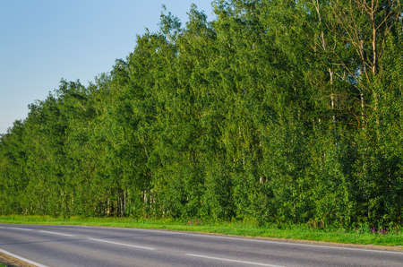 narrow country road near a forest in evening time