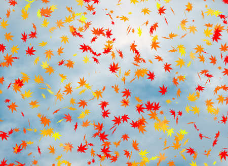 cloudiness: fall of the leaves on blue cloudiness sky backgrounds