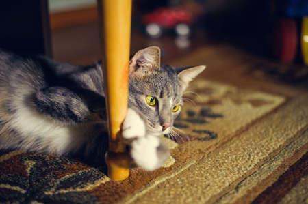 ambush: observe cat.  lying in ambush
