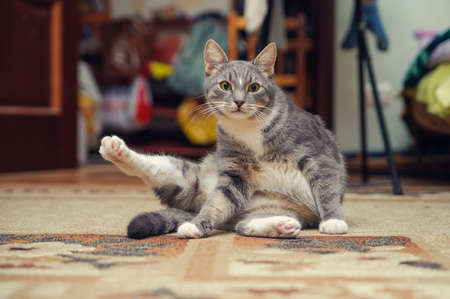 hairy legs: fitness cat sitting and to do exercise