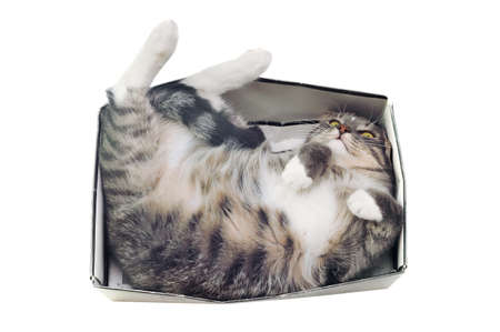 cramped space: cat lying in box on white background. High-key photo technique