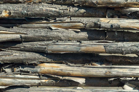 gnaw: fasten fence from brushwood. Wood texture. Gnaw bark