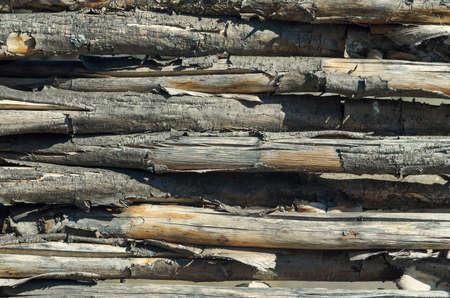 brushwood: fasten fence from brushwood. Wood texture. Gnaw bark