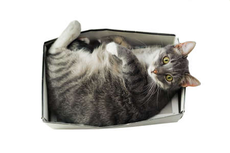 cramped space: cat lying in box on white background. High-key photo technique. Focus on cats eyes Stock Photo