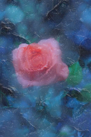 frost bound: frozen iced red rose