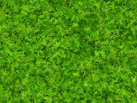 hires: lush green branchy thorn hi-res background Stock Photo