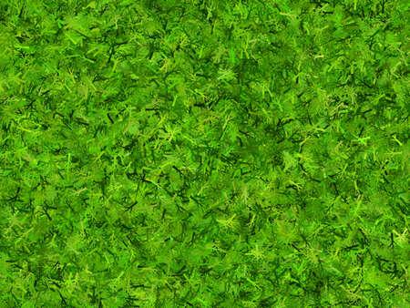 branchy: lush green branchy thorn hi-res background Stock Photo