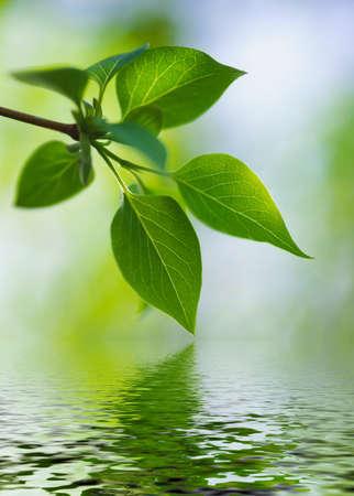 lush foliage: green lush foliage of tree near water on a blur backgrounds