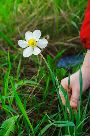 pluck: kid hands to pluck a white flower. Focus on flower