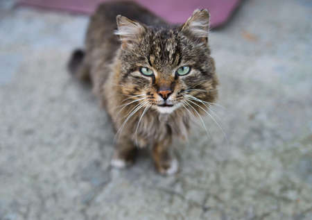 imperturbable: unruffled wild cat. standing and looking up