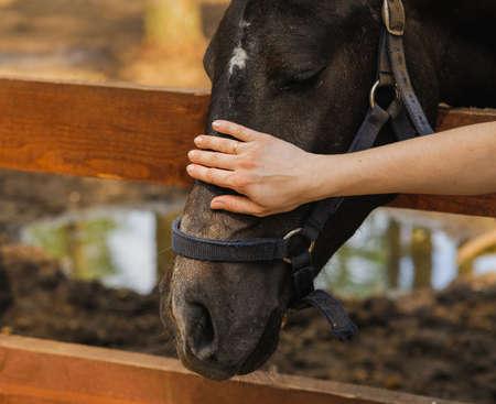 caress: woman hand caress pet horse on head