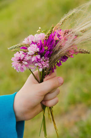 nosegay: small nosegay of wild flowers in a hand on nature backgrounds