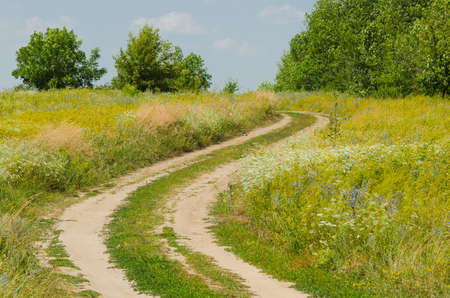 rural road through grass meadow. Nature background. Focus on a grass