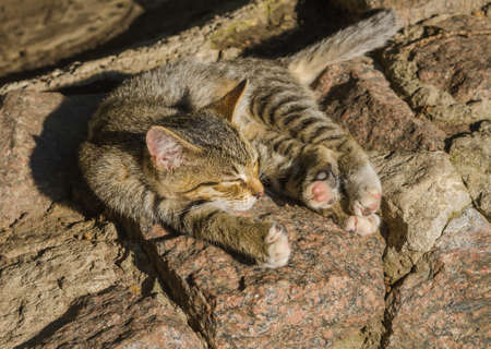 doze: young sleeping small wild cat Stock Photo