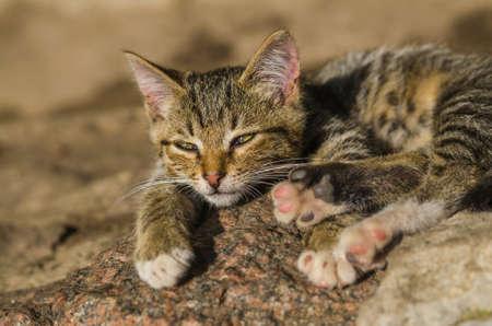 observe young small wild cat. lying in ambush