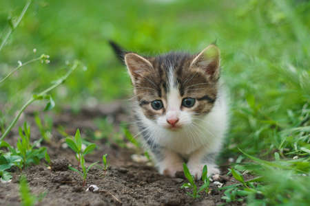 walking small kitty with big eyes