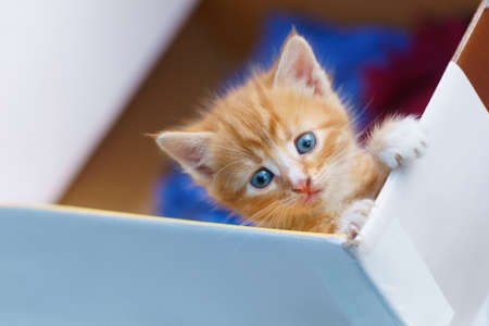 young small kitten lean out of box and looking