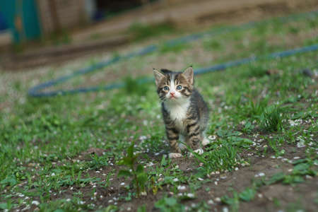 walking small kitty on a farm Stock Photo