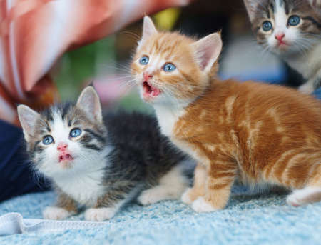 young small nice hungry Kittens looking up Stock Photo