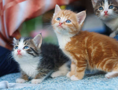 bashful: young small nice Kittens looking up