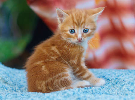young small kitten sit and looking
