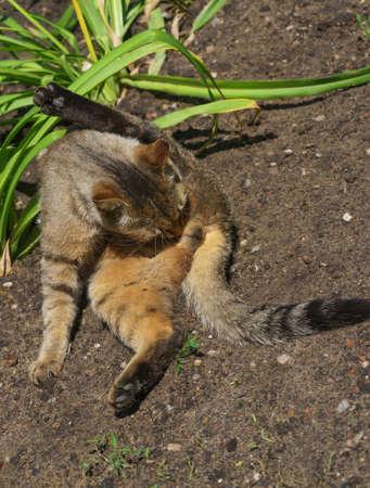 wash itself sitting cat