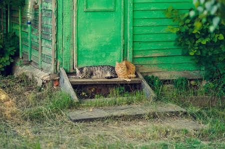 resting relax two quiet cat near wooden door