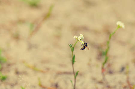 one bee sitting on a small flower. selective focus. vintage color