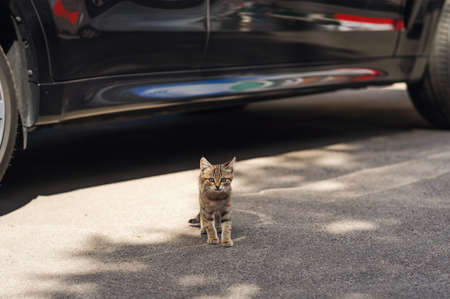 Small kitten that got out from under the car. Standing and looking