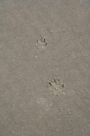 Dog Tracks in Sand photo
