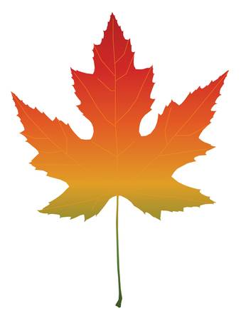 fall leaf: Isolated maple leaf with autumn color gradient. Vector illustration Illustration