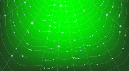 dewdrops: Vector Spider Web with Water Drops