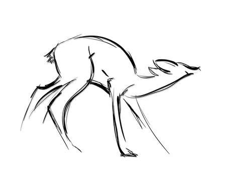 black tail deer: Doe standing. Sketch Vector illustration. Illustration