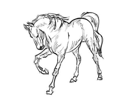 steed: Galloping horses. Hand-drawn illustration