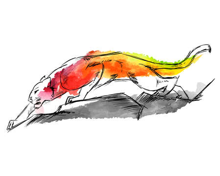 Young Cougar prepares to jump. Sketch. Hand-drawn vector illustration  in watercolor drawing style Illustration