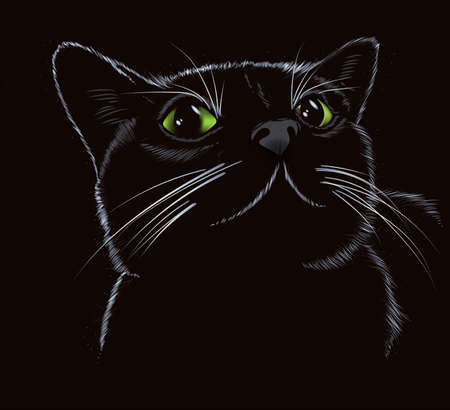 Vector sketch. Black cute kitty on a black background.