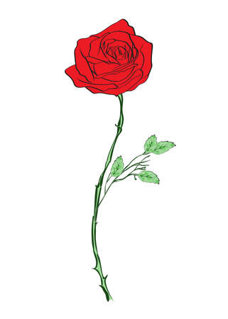 Deep red, ruby rose flower with green leaves, sketch style vector illustration isolated on white background. Realistic hand drawing of open red rose, symbol of love, decoration element