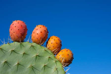 ficus: Opuntia ficus indica Stock Photo