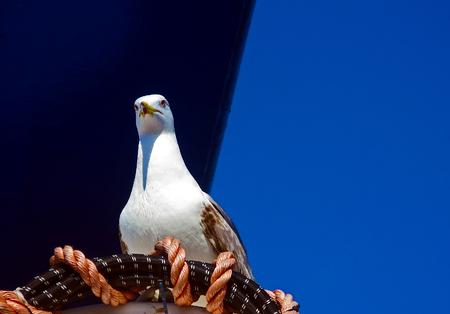 hawser: seagull rests on a hawser