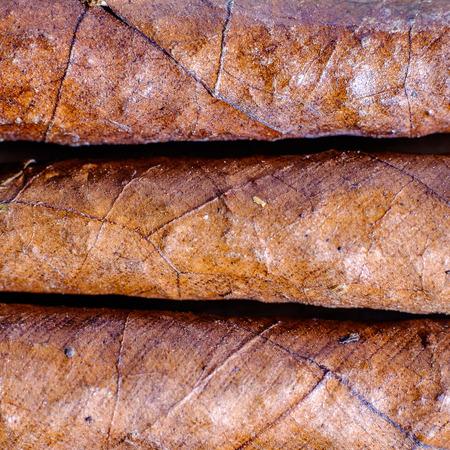Closeup of three Tuscan cigars