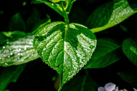 raindrops on green leaves Reklamní fotografie