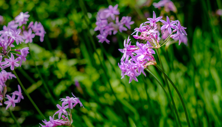 Purple wildflower closeup