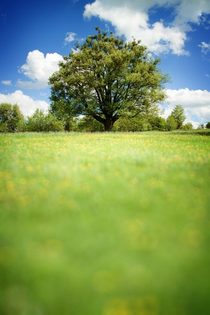 Spring landscape with tree in vibrant color. Blurred space can be place for any text. 版權商用圖片