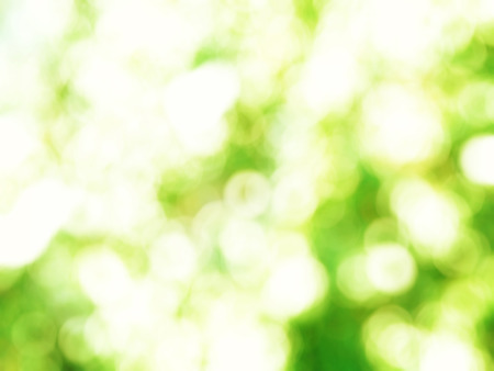 Bokeh blurry image of green leaves on summer day.