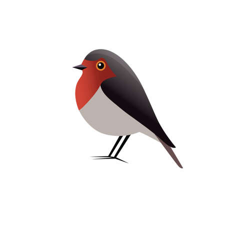 Robin Bird Vector Clipart