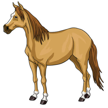 brown horse: Brown Horse White Head Illustration