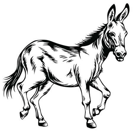 Donkey Stylized Drawing Illustration Vector Illustration