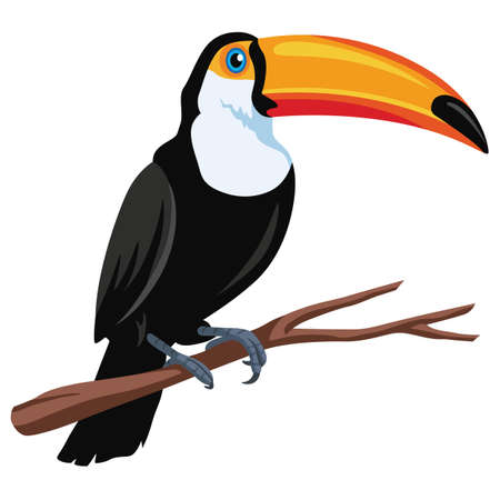 bird illustration: Toucan Bird Vector Illustration Flat Design